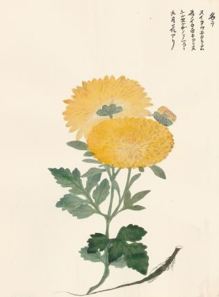 Yellow Chrysanthemums. Japanese School