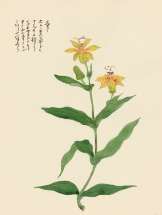 Exotic Yellow Flower. Japanese School