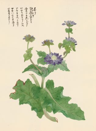 Purple Aster Flower. Japanese School