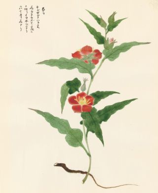 Red Wild Roses. Japanese School