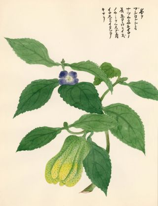 Purple Flowering Fruit. Japanese School