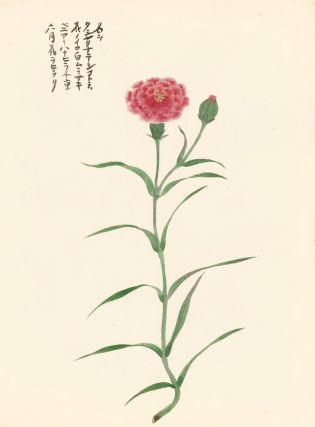 Red Carnation. Japanese School