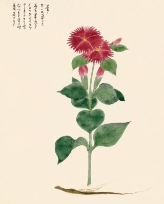 Red Aster Flower. Japanese School
