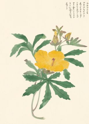 Yellow Hibiscus. Japanese School