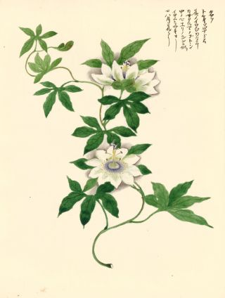 Passion Flower. Japanese School