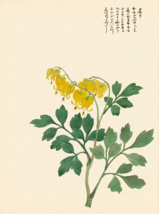 Yellow Bleeding Hearts. Japanese School