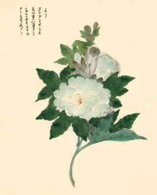 Light Blue Peony. Japanese School