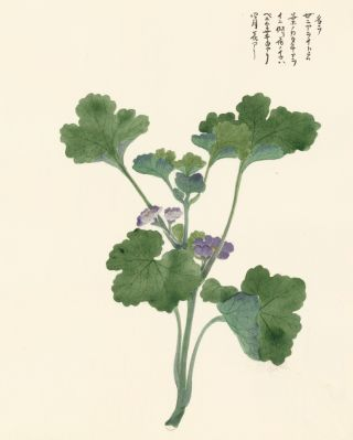 Ground Ivy. Japanese School