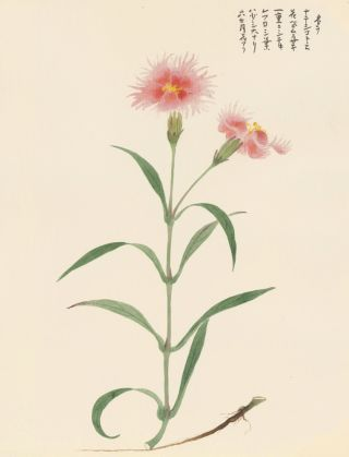 Dianthus Flower. Japanese School