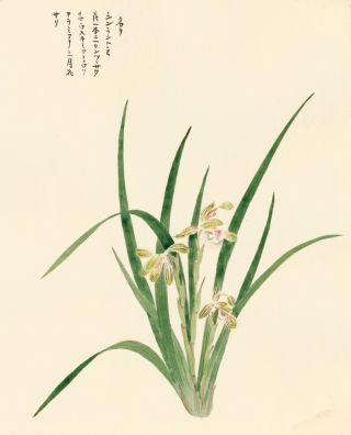 Irises. Japanese School