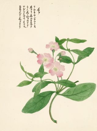 Pink Wild Rose. Japanese School.