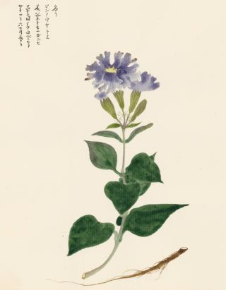 Blue Carnation. Japanese School.