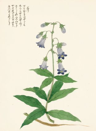 Penstemon, or beardtongues. Japanese School.
