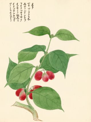 Red Berries. Japanese School.