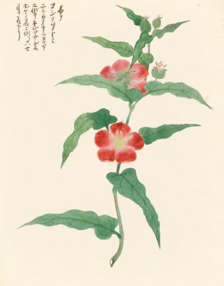 Red Wild Rose. Japanese School.