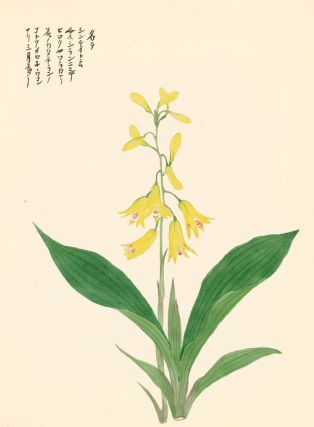Yellow Bellflower. Japanese School.
