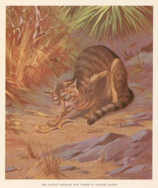 The Native Wildcat was Tamed in Ancient Egypt. Homes and Habitats of Wild Animals. Walter Alois...