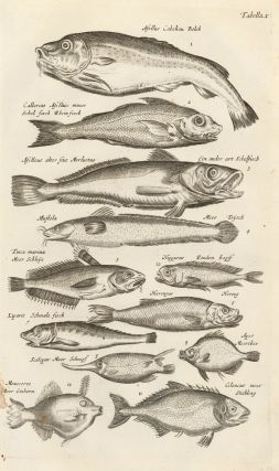 Tab. X. Clupeid fish, or herrings, shads, and sardines. Historia Naturalis, de Exanguibus...