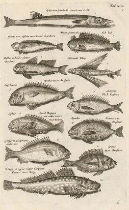 Tab. XVIII. Sparidae family, or sea breams and porgies. Historia Naturalis, de Exanguibus...