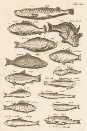 Tab. XXIX. Bottom feeders. Historia Naturalis, de Exanguibus Aquaticis. Johann Jonston