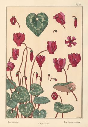 Cyclamen. La Plante et ses applications ornementale. Maurice Pillard Verneuil, Eugene Grasset