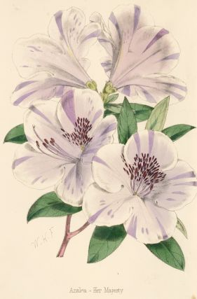 Azalea - Her Majesty [Gladiolus]. The Florist and Pomologist: A Pictorial Monthly Magazine of...