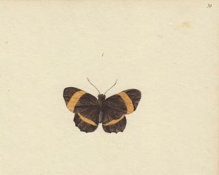 Black and yellow butterfly. Butterflies and Insects. Sara Anne Moore