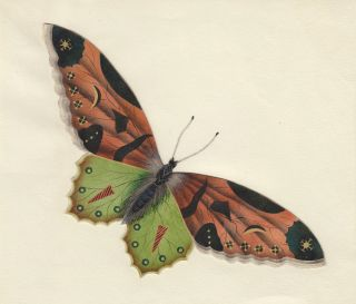Decorative butterfly. Butterflies and Insects. Sara Anne Moore