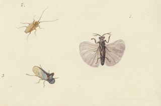 Three insects. Butterflies and Insects. Sara Anne Moore.