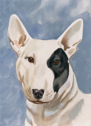 Bull Terrier. Unknown