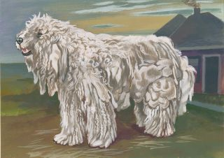Komondor. Unknown