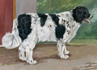Landseer. Unknown