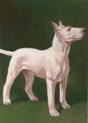 Bull Terrier. Unknown.
