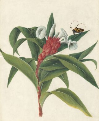 Tropical Plant & Insects]. European School